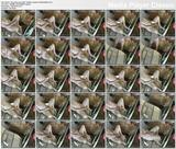 http://img259.imagevenue.com/loc241/th_12038_Clitpumpandvibe_hiddencameramasturbation.avi_thumbs_2014.11.09_09.56.09_123_241lo.jpg
